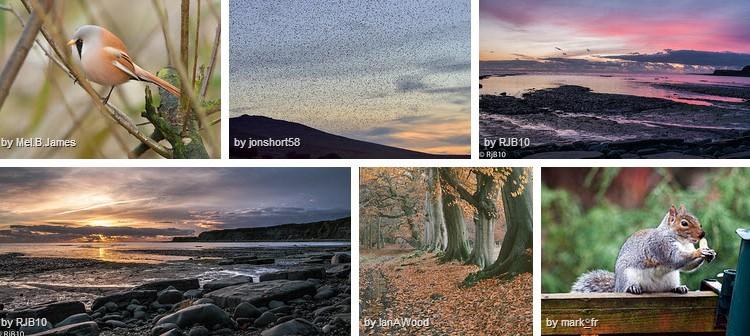 autumnwatch photos